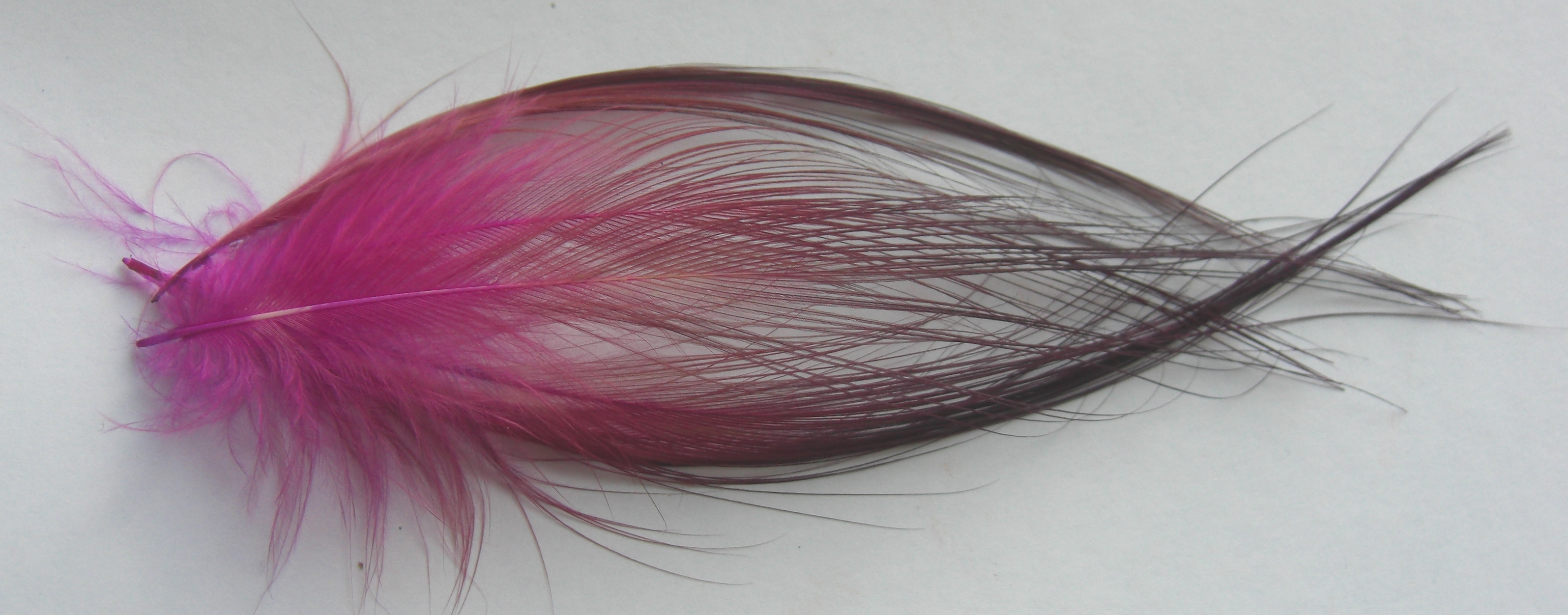 """50 HERON FEATHERS /"""" SPEY /"""" Dyed 6 /"""" Size=  5 /"""" Black"""